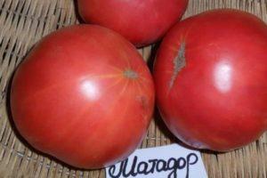 Описание томата Матадор и выращивание сорта для качественного урожая