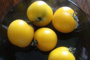 Описание томата Медовая гроздь, преимущества сорта и техника выращивания