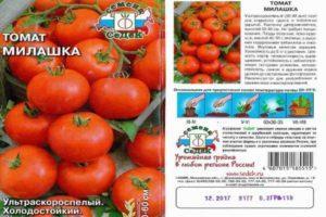 Описание томата Милашка и рекомендации по выращиванию растения