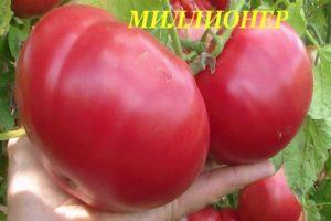 Описание высокорослого томата Миллионер и рекомендации по выращиванию рассады