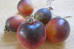 Описание томата Мохнатый Кейт, агротехника культивирования и выращивание сорта
