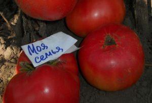 Описание томата Моя семья, методика выращивания сорта