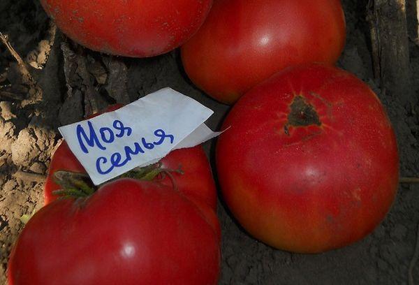 Спелые томаты