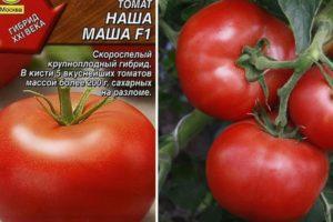 Описание томата Наша Маша и правила выращивания рассады