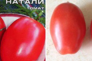 Описание томата Натали, выращивание сорта и правила посадки