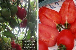 Описание томата Немецкая красная клубника и рекомендации по выращиванию