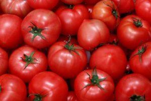 Описание томата Ноктюрн и правила выращивания гибридного сорта