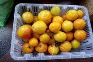 Описание томата Новогодний и правила выращивания в тепличных условиях