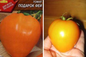 Описание томата Подарок феи и выращивание данного сорта