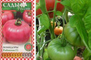 Описание раннеспелого сорта томата Робинзон и рекомендации по выращиванию растения