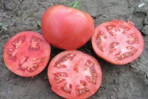 Описание томата Розализа f1 и особенности выращивания гибридного сорта