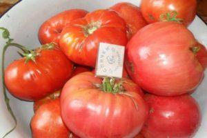 Характеристика гибридного сорта томата Розмарин и агротехника культивирования