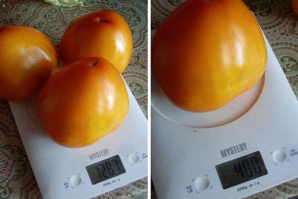 Помидоры на весах