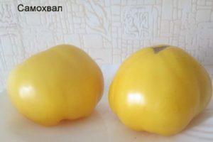 Характеристика томата Самохвал и агротехника выращивания растения