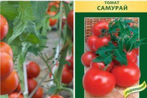 Описание томата Самурай и правила выращивания индетерминантного сорта