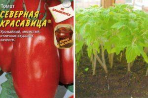 Характеристика томата Северная красавица и описание плодов