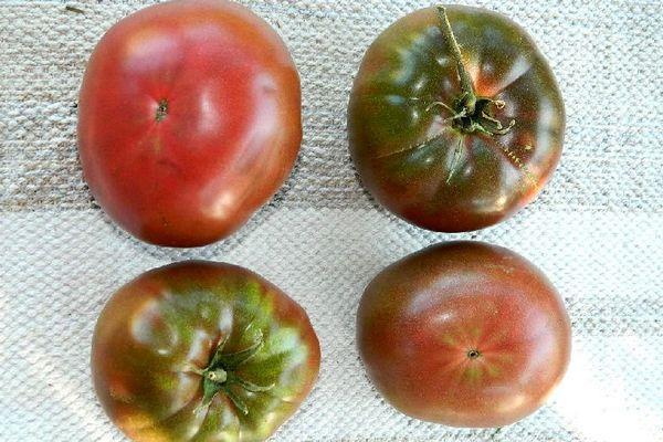 Четыре помидора