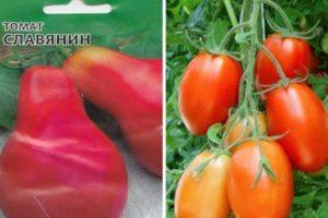 Описание томата Славянин и правила выращивания растения из семян