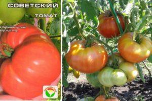 Описание томата Советский и особенности выращивания сорта