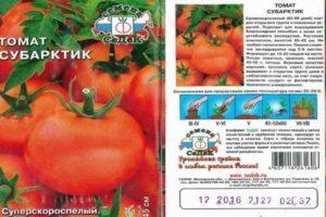 Описание томата Субарктик, правила посадки и выращивание растения