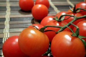 Описание раннеспелых томатов Тамина и особенности выращивания сорта