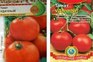 Описание томата Удачный и особенности выращивания помидоров