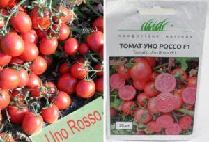 Характеристика томата Уно Россо F1 и агротехника культивирования гибрида