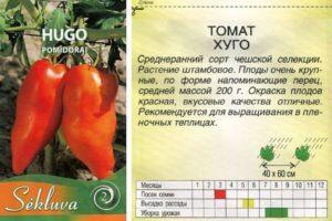 Описание томата Хуго, выращивание гибридного сорта рассадным способом и дальнейший уход