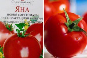 Описание томата Яна и выращивание детерминантного сорта