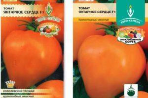 Описание томата Янтарное сердце, советы по выращиванию и отзывы