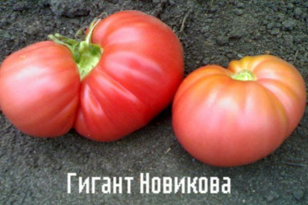 Крупные помидоры