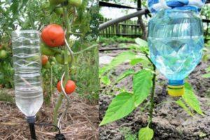 Как сделать капельный полив из пластиковых бутылок для помидоров своими руками