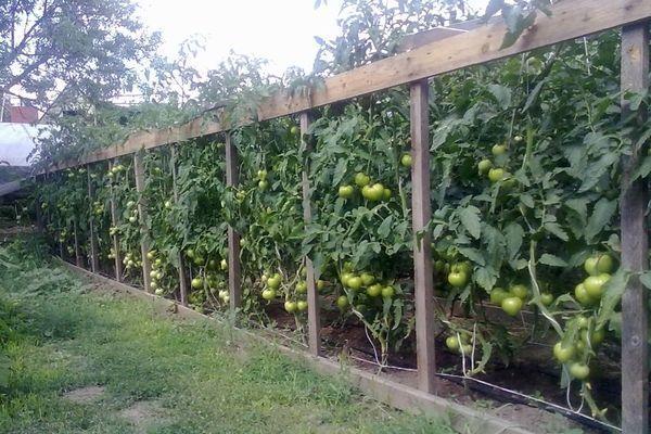 Опоры для помидоров
