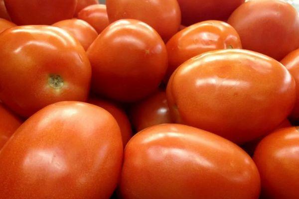Гибридные помидоры