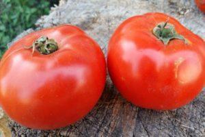 Описание гибридного томата Аргонавт и особенности выращивания в открытом грунте