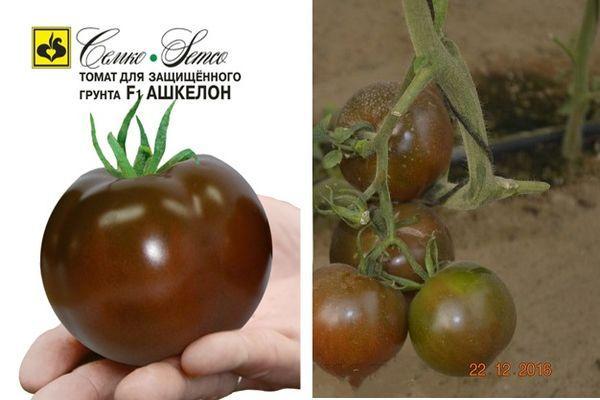 Гибридный томат