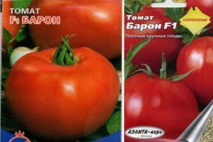 Характеристика гибридного сорта томата Барон и агротехнические правила выращивания