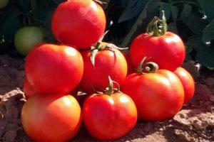 Преимущества гибридного томата Белфорт и рекомендации по выращиванию сорта