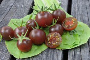 Описание экзотического сорта томата Блэк черри и агротехника культивирования