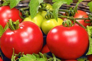 Описание томата Боливар F1 и агротехника выращивания