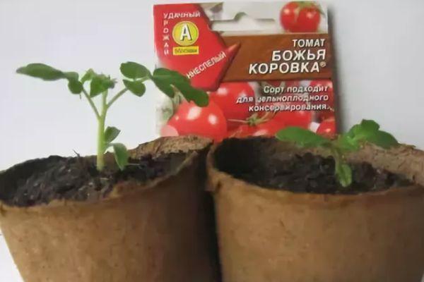 Рассада и семена