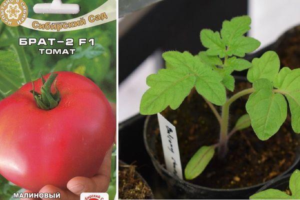 Семена и росток