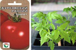 Характеристика и описание томата Бурковский ранний, рекомендации по выращиванию сорта