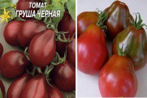 Характеристика томатов Черная груша и особенности выращивания сорта