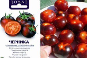 Описание и особенности культивирования сорта томата Черника