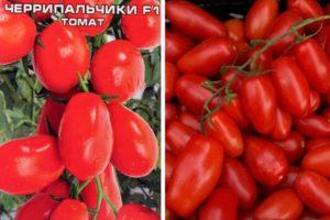 Характеристика сорта томата Черрипальчики и советы по его выращиванию