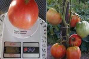 Характеристика томата Дакоста португальская и культивирование сорта