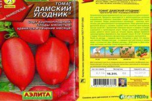 Описание томата Дамский угодник, советы по выращиванию рассады и уход за сортом