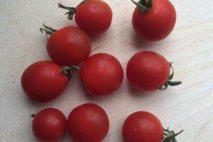 Описание томата Детская радость f1 и выращивание сорта на своем участке