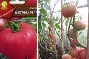 Описание гибридного томата Джульетта и выращивание сорта из семян
